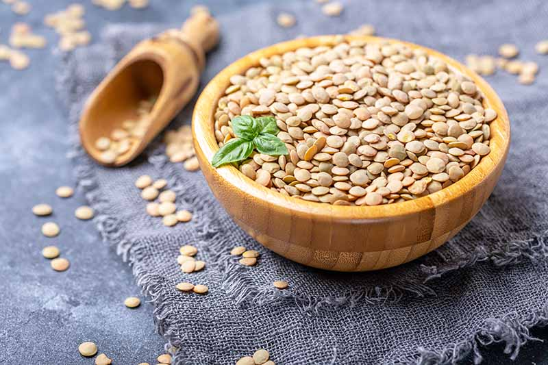 Reasons why you should include nutritious lentils in your diet: Learn the benefits for effective health