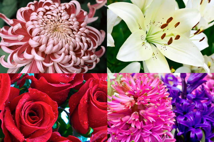 SIGNIFICANCE OF DIFFERENT TYPES OF FLOWERS