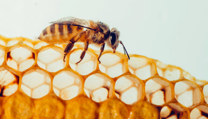 Propolis: The Wonders of this Bee Product